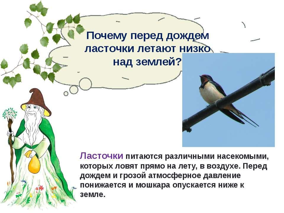 Ласточки летают низко: что означает данная примета