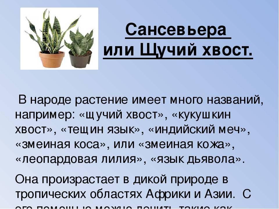 Красивые кактусы: как вырастить в домашних условиях + фото и видео
