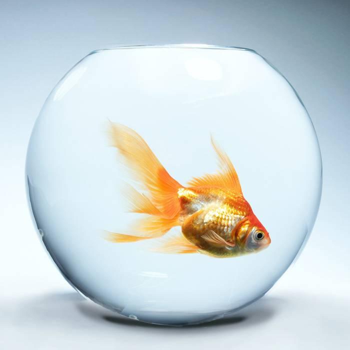 """Гадание """"золотая рыбка"""", на 3 желания гадать - способы и полезные советы"""