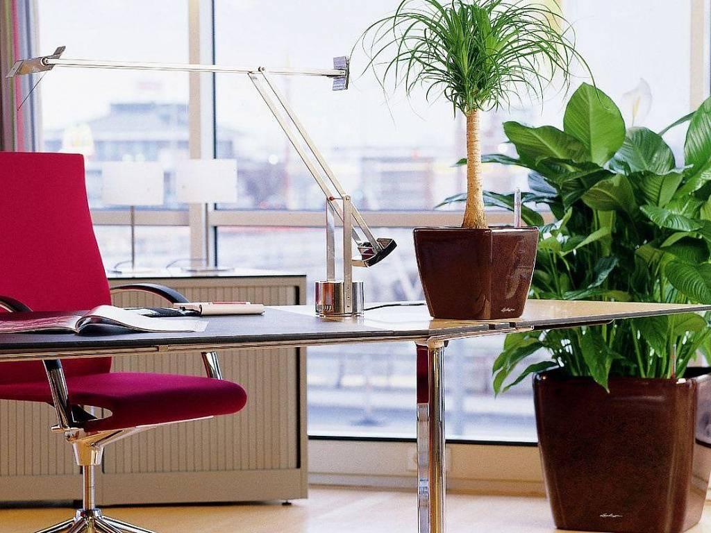 Фен шуй рабочего стола для тех, кто недоволен своей зарплатой или медленным продвижением по карьере