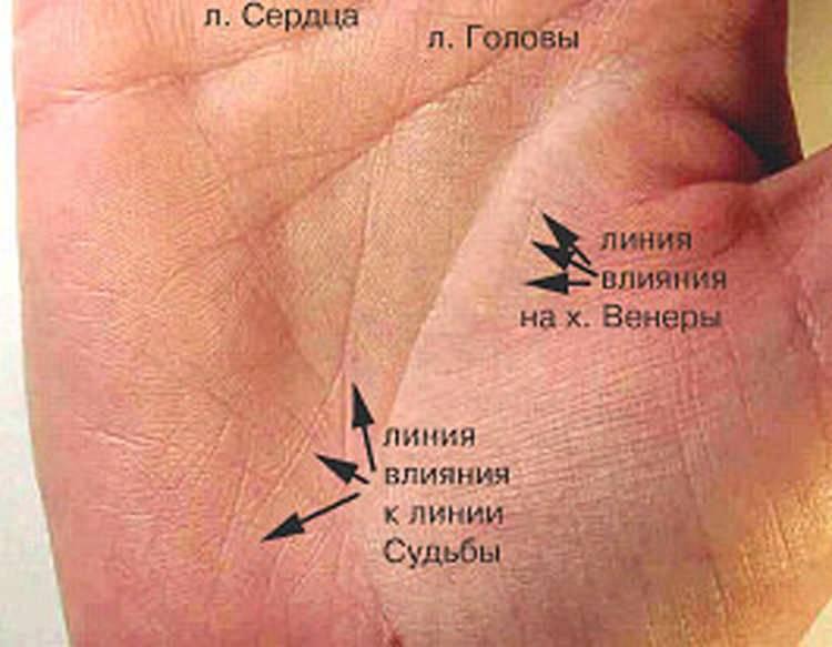 Линия судьбы на руке - как по ней узнать свою жизнь: фото с расшифровкой