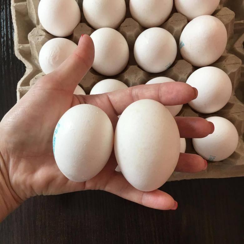 К чему снится много яиц по соннику? видеть во сне много яиц – толкование снов.