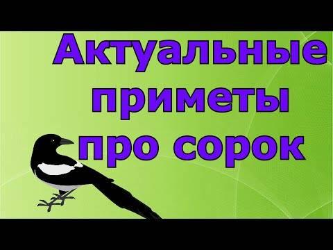 К чему голубь задевает крылом лицо, голову: толкование приметы