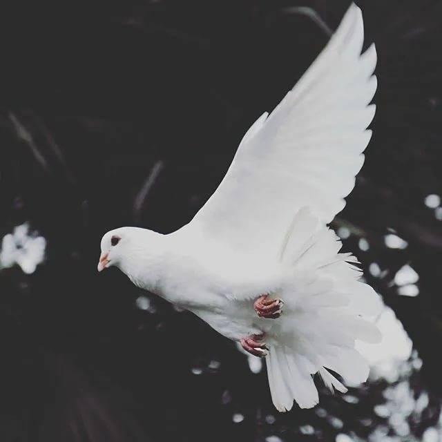 Сонник белые голуби в небе. к чему снится белые голуби в небе видеть во сне - сонник дома солнца