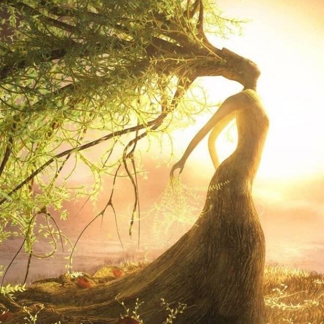 Деревья-доноры и деревья-вампиры. энергия деревьев.  лесные доноры и вампиры. | психология отношений