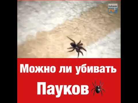 Почему нельзя убивать пауков дома: приметы, поверья
