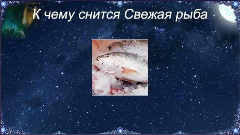 К чему снится живая рыба? толкование по 57 сонникам