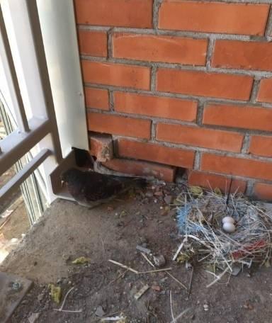 Птицы свили гнездо на балконе — значение приметы