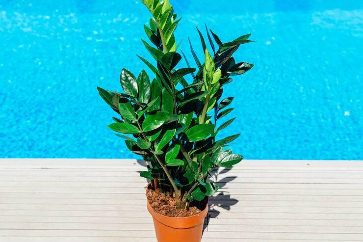 Растения, приносящие удачу или несчастье в дом