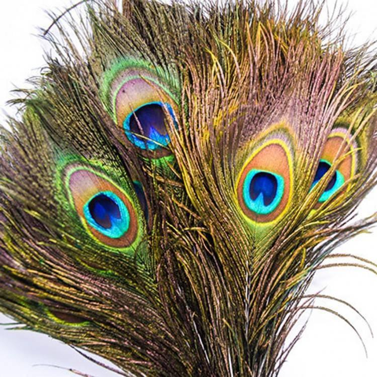 Павлиньи перья - фен-шуй: все грани гармонии. - страна мам