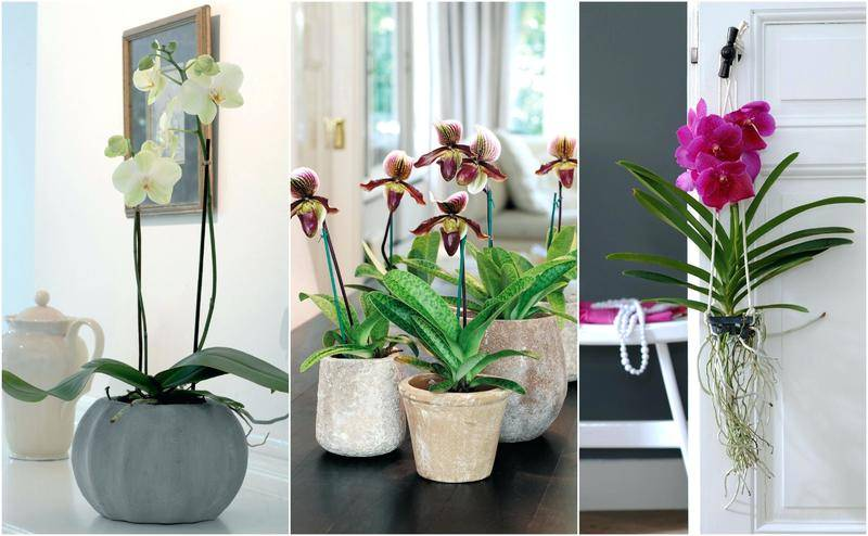 Узнайте, можно ли держать дома орхидеи: приметы и суеверия