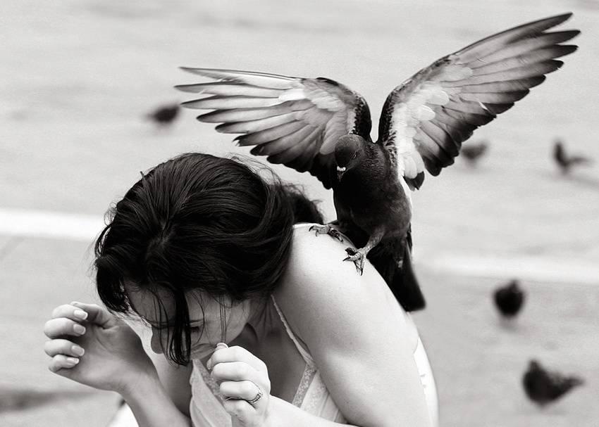 Птица накакала на голову, примета — что значит испачканная одежда, машина
