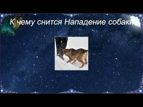 Сонник стая собак нападает на ребёнка. к чему снится стая собак нападает на ребёнка видеть во сне - сонник дома солнца