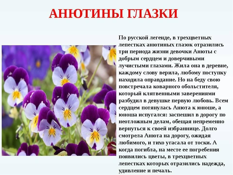 Беседа с детьми «легенда о происхождении цветов»